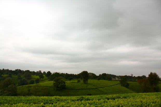 Teplantasjene ved Brackenhurst står i sterk kontrast til resten av Kenya.
